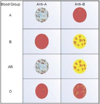 Cell grouping by slide method