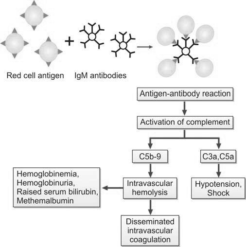 Figure 1196.1 Pathophysiology of acute hemolytic transfusion reaction