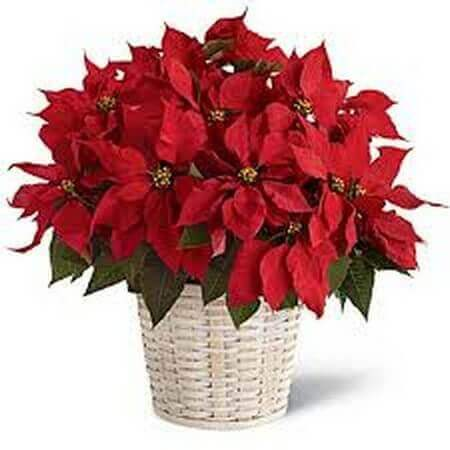 Happy Holiday Planter Basket