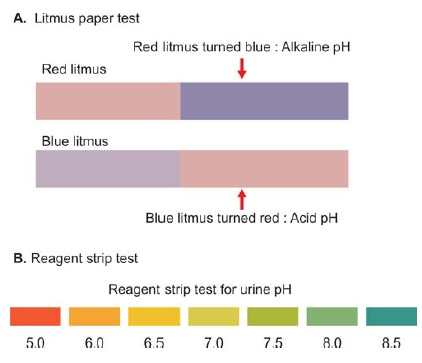 Figure 819.2 A. Testing pH of urine with litmus paper and B. with reagent strip test