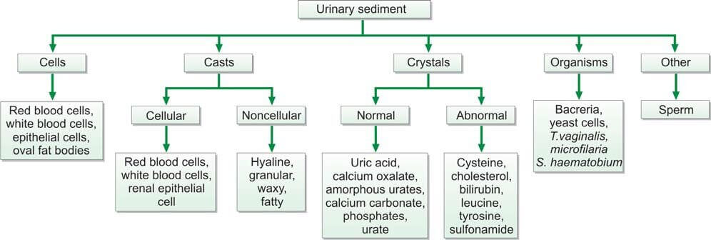 Figure 825.1 Different types of urinary sediment