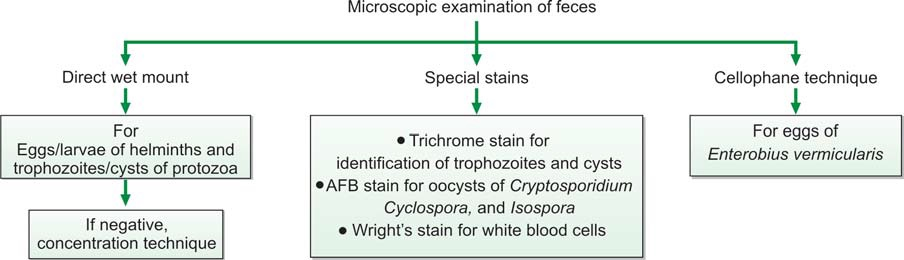 Figure 846.1 Microscopic examinations carried out on fecal sample
