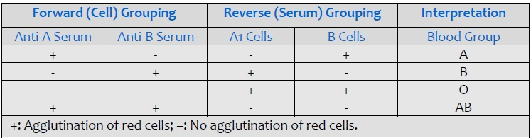 Interpretation of forward cell and reverse serum grouping