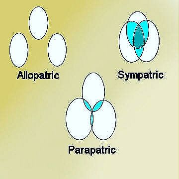 allopatric parapatric speciation19