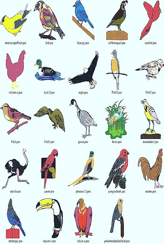birds aves types thumb24