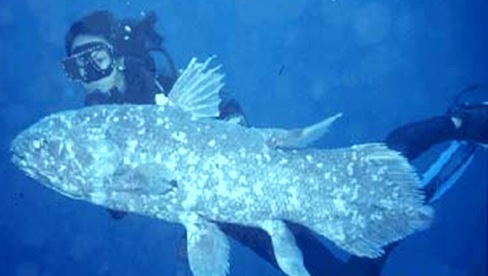 coelacanth Latimer thumb17