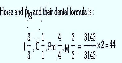 dental formula thumb10