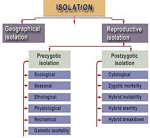 isolationgeographicalevolution