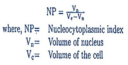 nucleas cell nucleoplasmic index 17