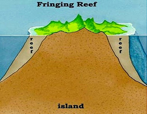 Coral Reefs  Types And Formation