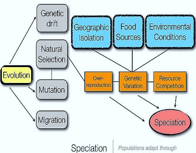SPECIFICATION IN ORGANIC EVOLUTION