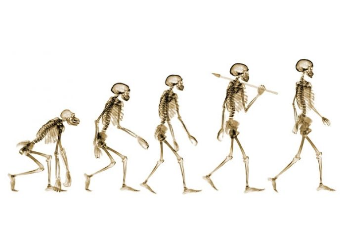 15 Main Theories of Biological Evolution of Man (with Statistics)