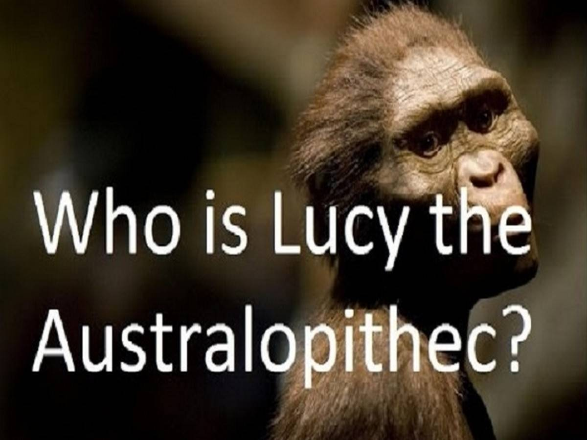 Who is Lucy the Aurtralopithec