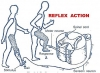 REFLEX ACTIONS AND REFLEX ARC