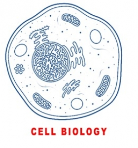 CELL BIOLOGY (CYTOLOGY)