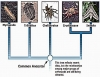 PHYLUM ARTHROPODA: CHARACTERISTICS AND CLASSIFICATION