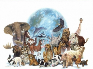 FACTS OF ANIMAL WORLD