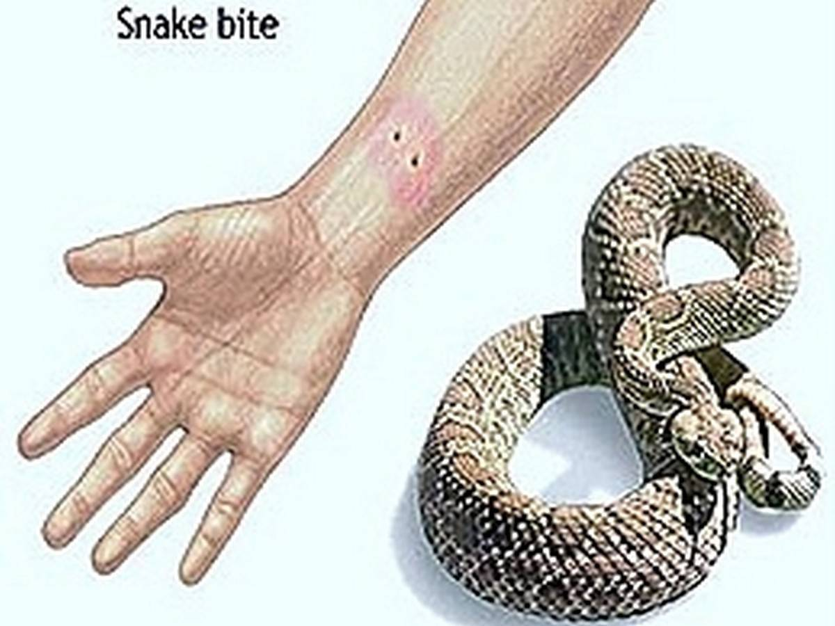BITING MECHANISM OF A SNAKE