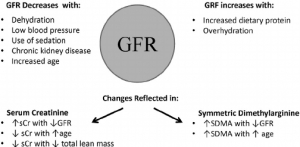 Changes in Glomerular Filtration Rate (GFR) are reflected in serum concentration