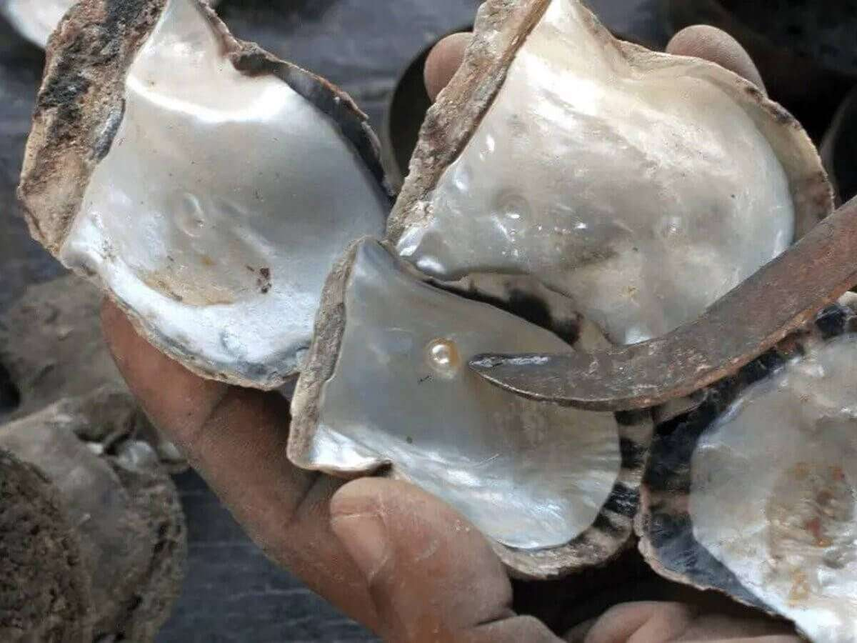 PROCESS OF FORMATION OF PEARL IN MOLLUSCS