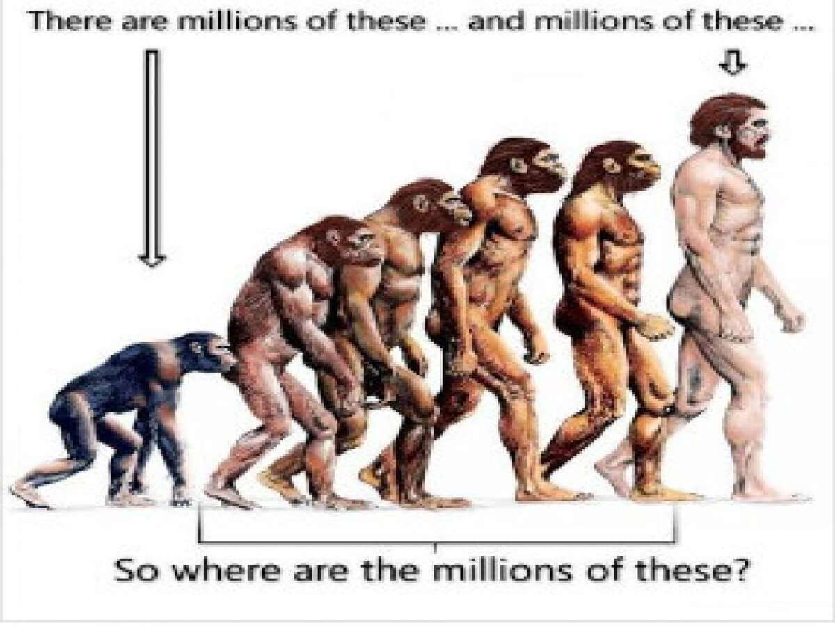 If We Evolved From Monkeys, Why Are There Still Monkeys?