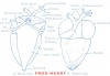 COMPARATIVE ANATOMY: HEART OF RABBIT AND FROG