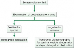 Evaluation of low semen volume