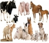 INTRODUCTION TO ANIMAL BREEDING
