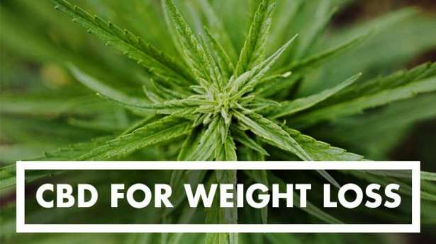 What Is CBD? The Relationship Between CBD And Weight Loss